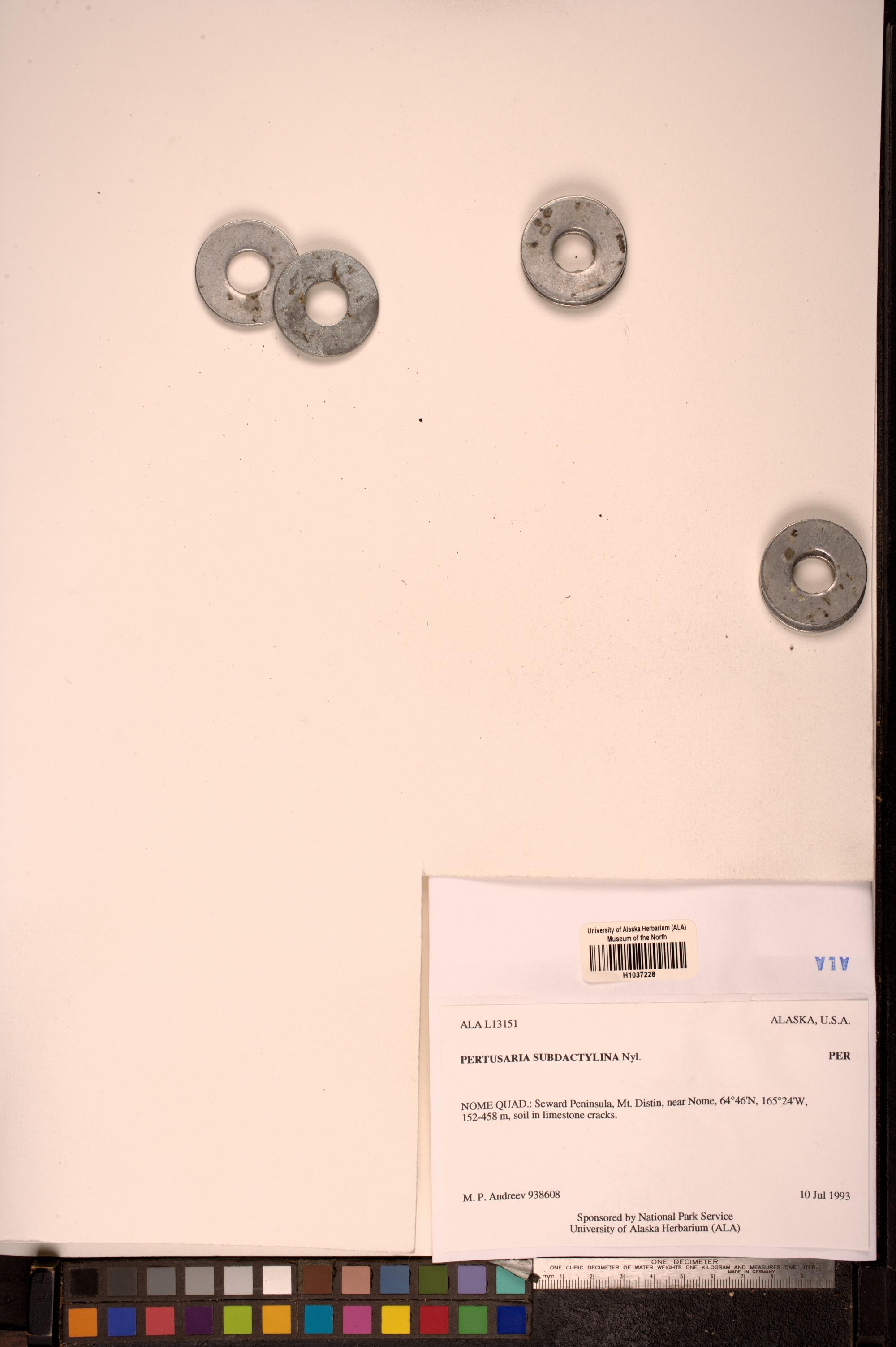 Lepra subdactylina image